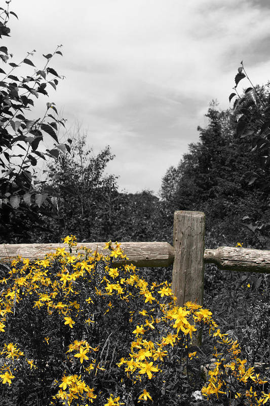 Landscape Art Print featuring the photograph UP Post II by Dylan Punke