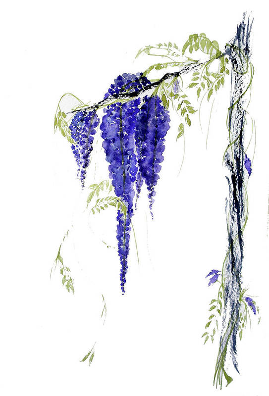Wisteria Art Print featuring the painting Wild Wisteria by Sibby S