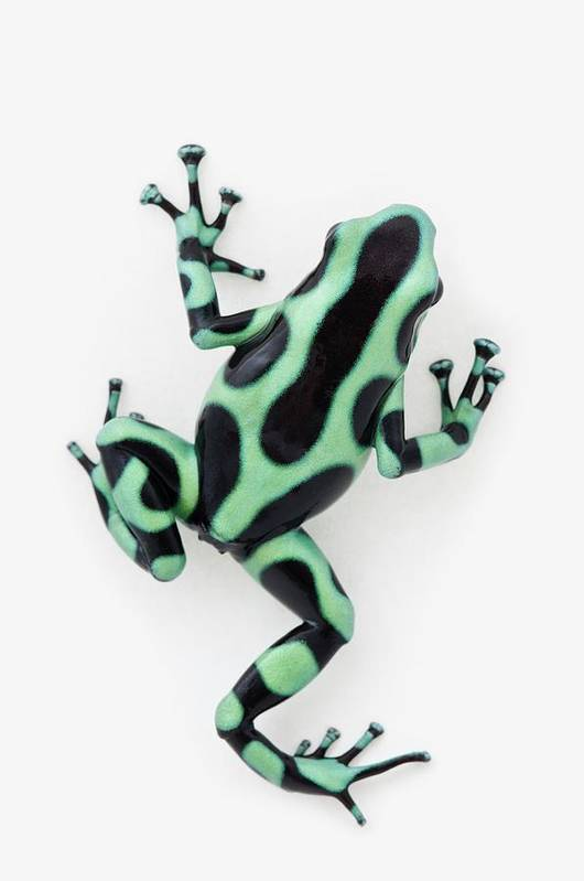 White Background Art Print featuring the photograph Black And Green Poison Dart Frog by Design Pics / Corey Hochachka