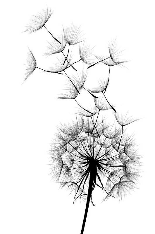 Wind Art Print featuring the photograph Dandelion by Sunnybeach