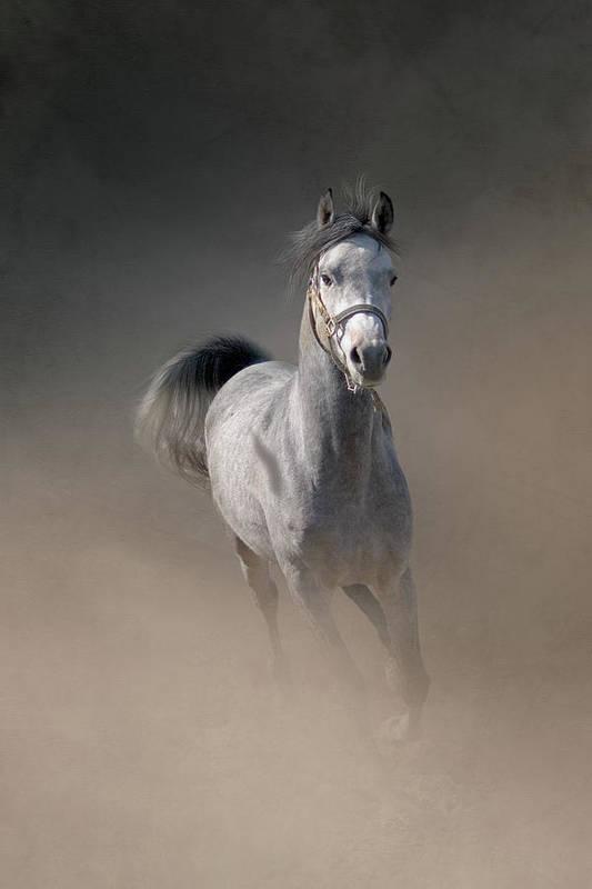 Horse Art Print featuring the photograph Arabian Horse Running Through Dust by Christiana Stawski