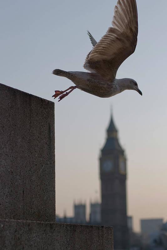 Clock Tower Art Print featuring the photograph Bird Takeoff by Photograph © Jon Cartwright