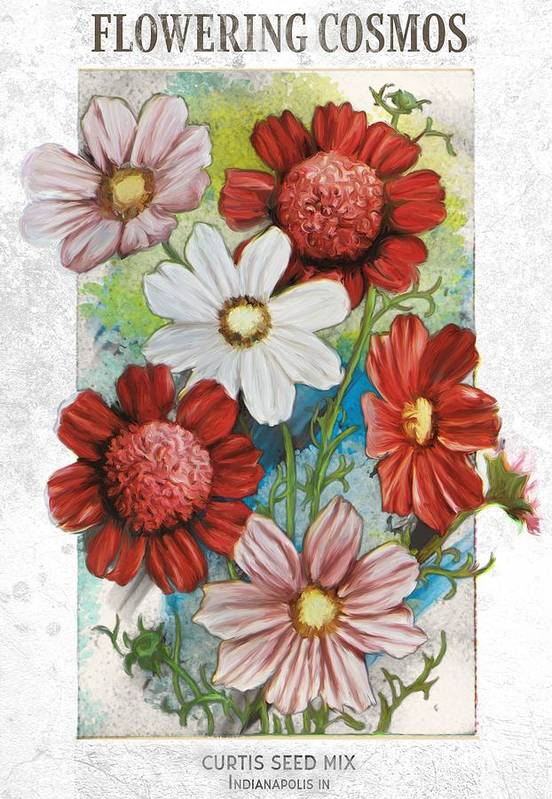 Art Art Print featuring the drawing Flowering Cosmos Seed Packet by Unknown