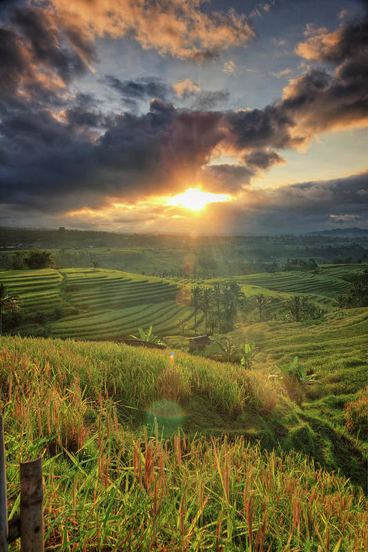 Tranquility Art Print featuring the photograph Indonesia, Bali, Jatiluwih Rice Terraces by Michele Falzone