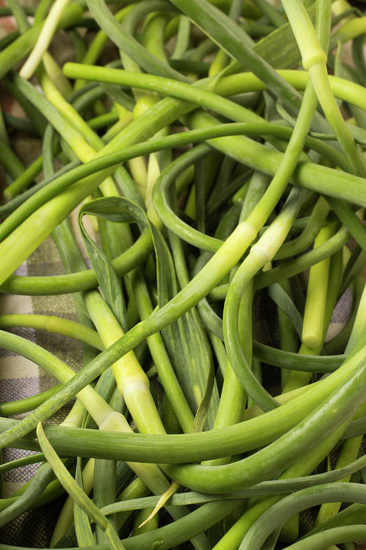 Season Art Print featuring the photograph Raw Garlic Scapes by Brian Yarvin