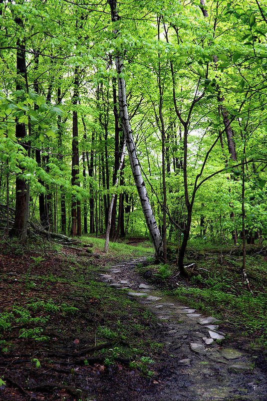 Nature Art Print featuring the photograph Stone Path with Birch by Tom Romeo