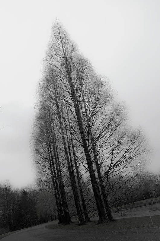 Tranquility Art Print featuring the photograph Trees In Winter Without Leaves by Marie Hickman