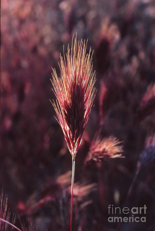 Art Print featuring the photograph Untitled by Randy Oberg