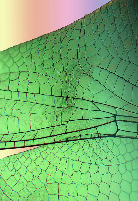 Macro Art Print featuring the photograph Dragonfly Wings 2 by Jim Painter