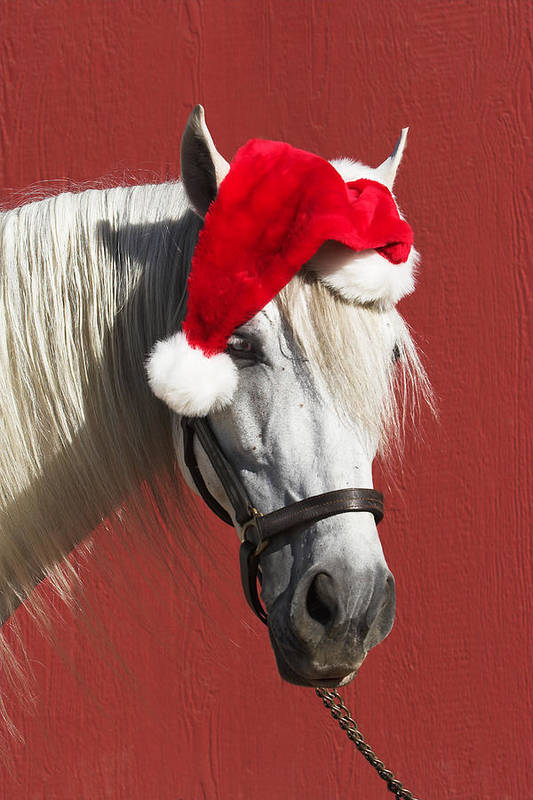 Horse Art Print featuring the photograph Equine Santa Horse Funny Clause Red Christmas by 66North