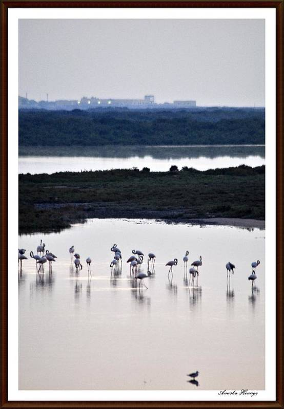 Reflection Art Print featuring the photograph Reflections by Anusha Hewage
