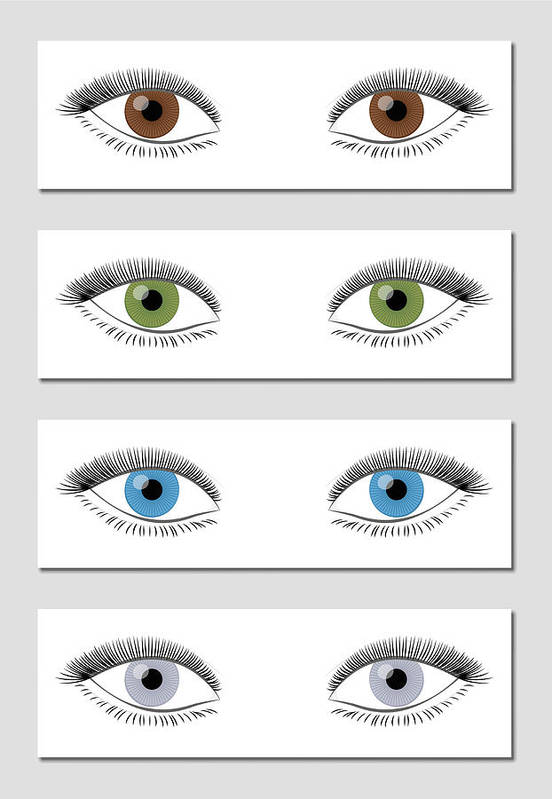 Eye Color Chart In Dominant Order Of Occurrence Brown Green Blue