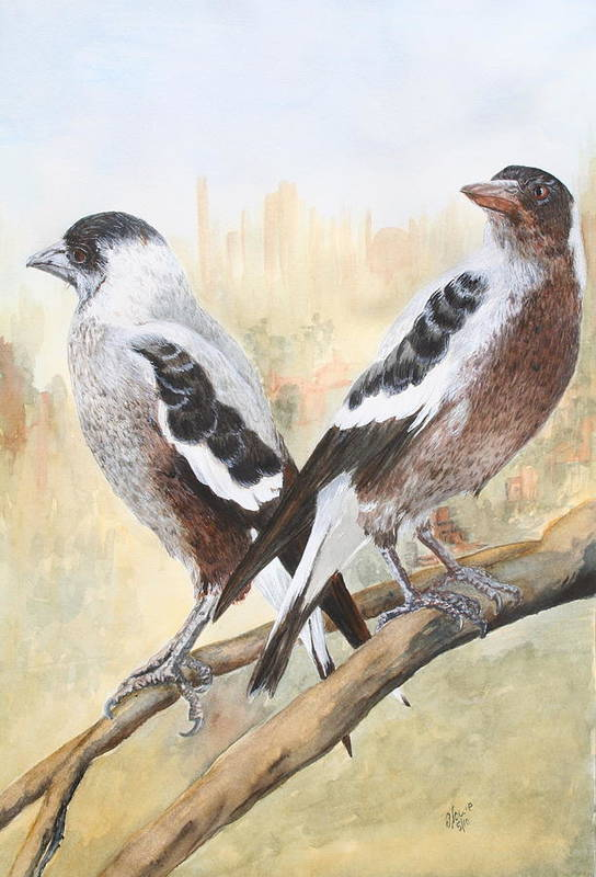 Birds Art Print featuring the painting Juvenile Maggies by Jan Lowe
