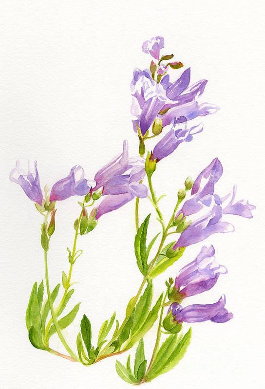 Penstemon Art Print featuring the painting Lavender Penstemon Wildflowers by Sharon Freeman