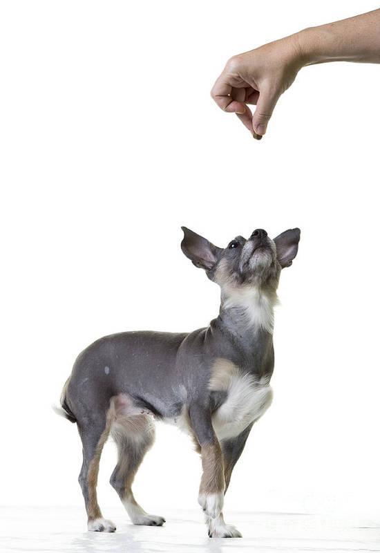 Dog Art Print featuring the photograph Motivation by Edward Fielding