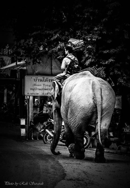 Elephant Art Print featuring the digital art Together..on..street... by Rak Sararak