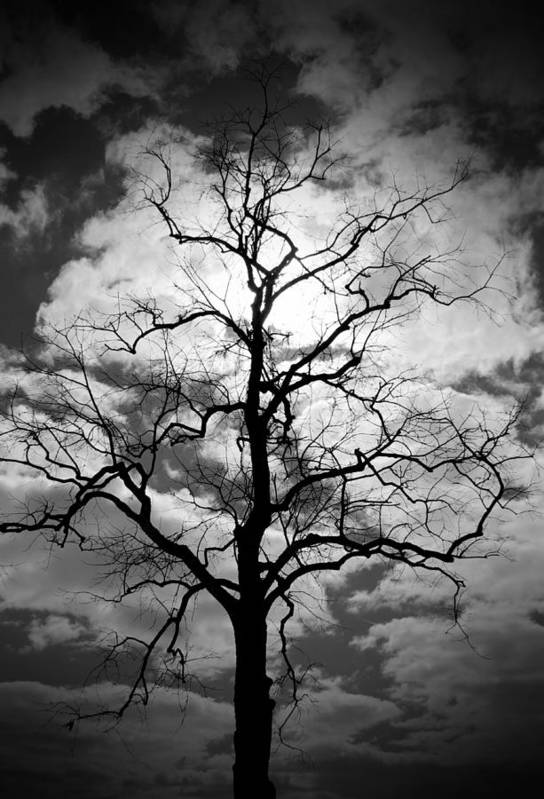 Tree Art Print featuring the photograph Wicked Tree by Audrey Skoglund