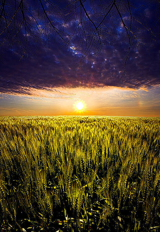Horizons Art Print featuring the photograph Light Bright by Phil Koch