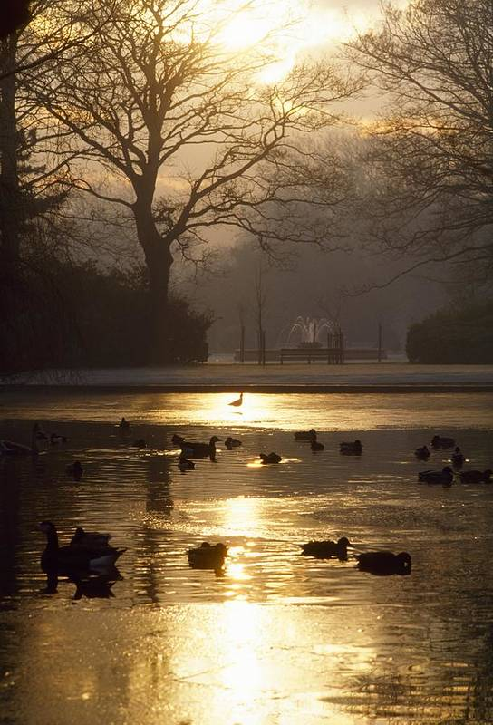 Back Lit Art Print featuring the photograph Saint Stephens Green, Dublin, Co by The Irish Image Collection