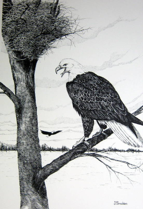 Eagle Family Art Print featuring the drawing Eagle At Nest by John Smeulders