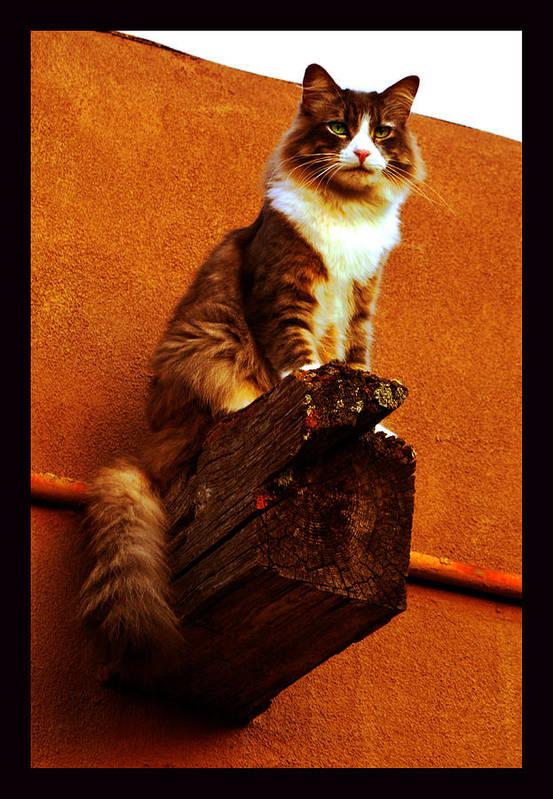 Cat Portrait Art Print featuring the photograph Kobe On Viga by Susanne Still