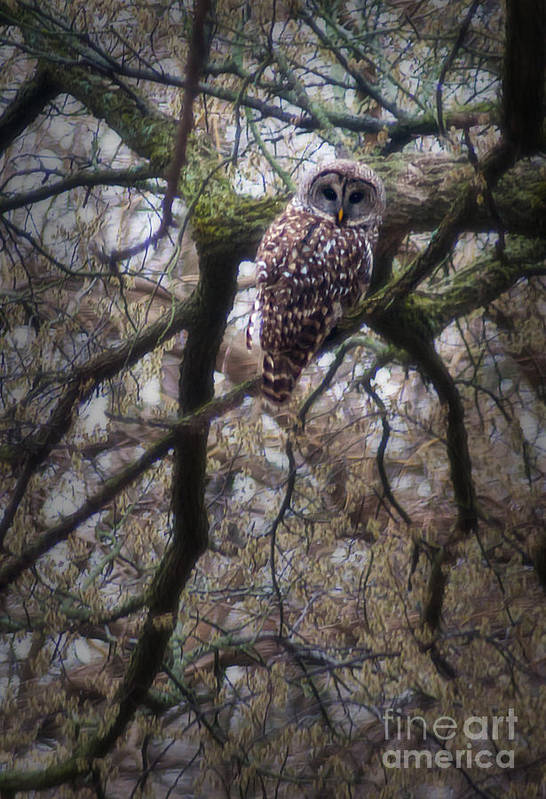 Owl Art Print featuring the photograph Morning Visitor by Fred Lassmann