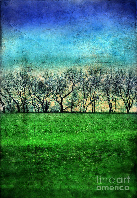 Trees Art Print featuring the photograph Row Of Trees by Jill Battaglia