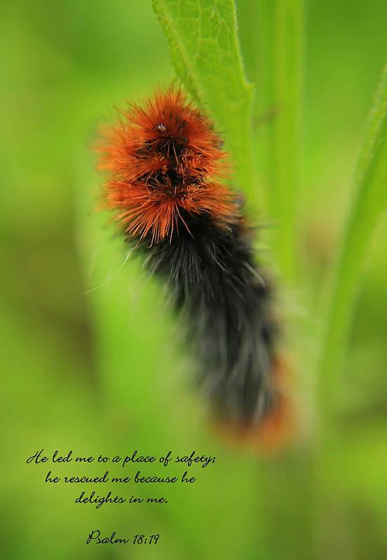 Caterpillar Art Print featuring the photograph Spring Caterpillar by Tyra OBryant