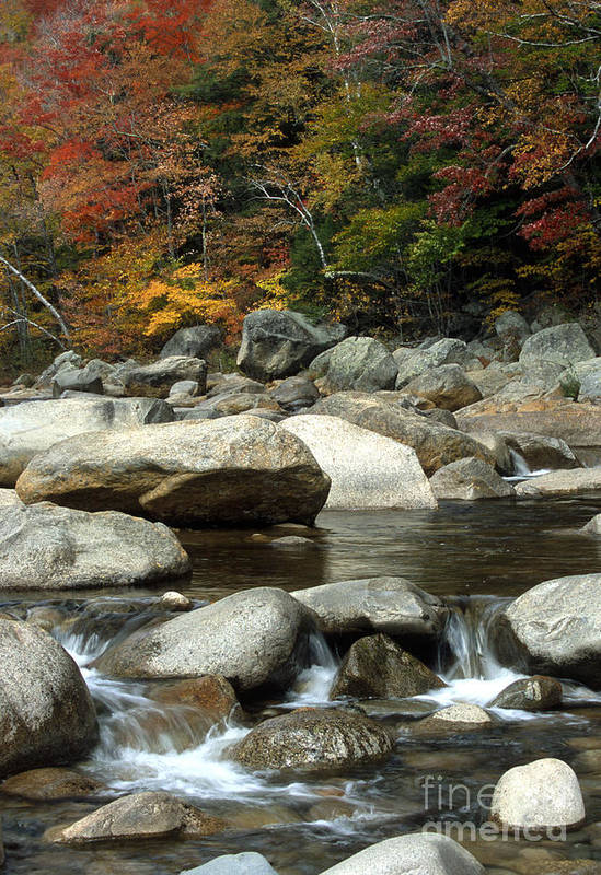 New Hampshire Art Print featuring the photograph Streamside Color by Sandra Bronstein