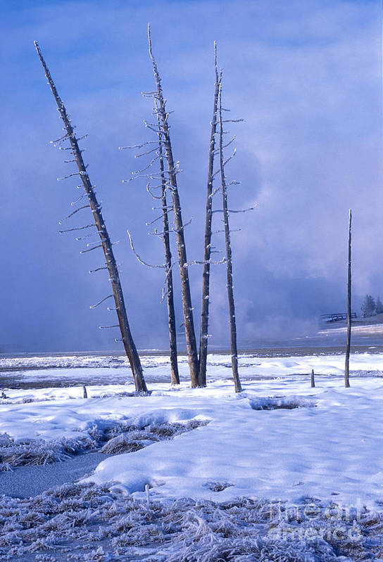 Yellowstone Art Print featuring the photograph Winter by Sandra Bronstein