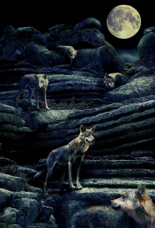 Wolf Art Print featuring the photograph Moonlit Wolf Pack by Mal Bray