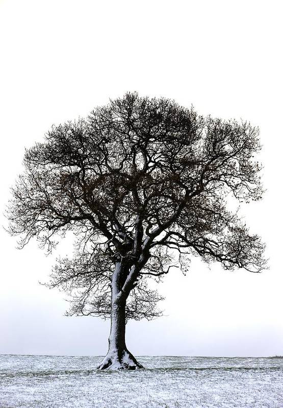 Photography Art Print featuring the photograph Lone Tree In Field by John Short