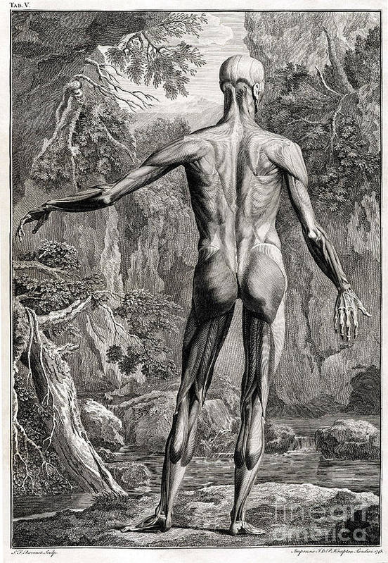 Science Art Print featuring the photograph 18th Century Anatomical Engraving by Science Source