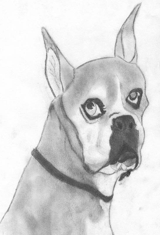 Boston Terrier Art Print featuring the drawing Boston Terrier by Josh Bennett