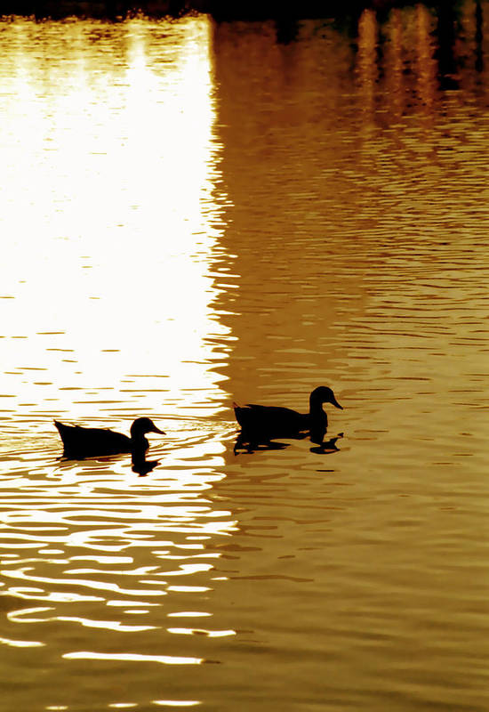 Silhouettes Art Print featuring the photograph Ducks On Pond 2 by Steve Ohlsen