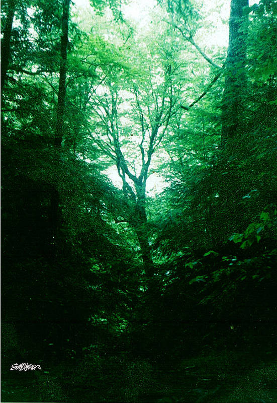 Emerald Art Print featuring the photograph Emerald Glade by Seth Weaver