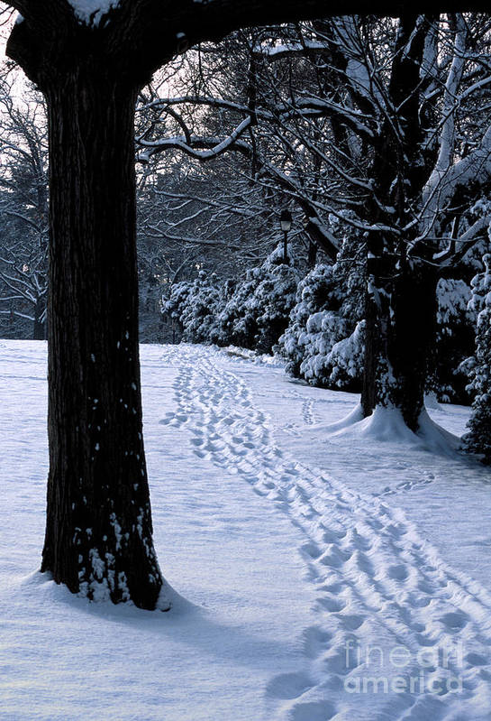 Cold Art Print featuring the photograph Footprints In The Snow by William Kuta