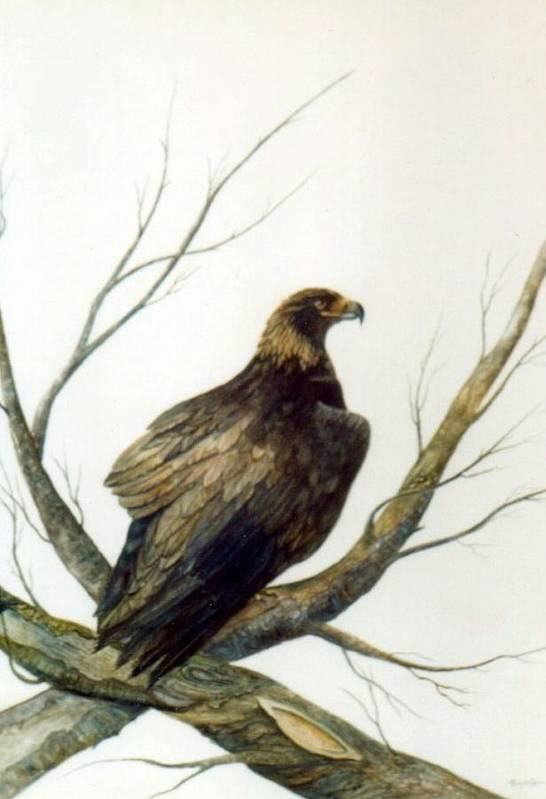 Eagle Art Print featuring the painting Golden Eagle by Ben Kiger