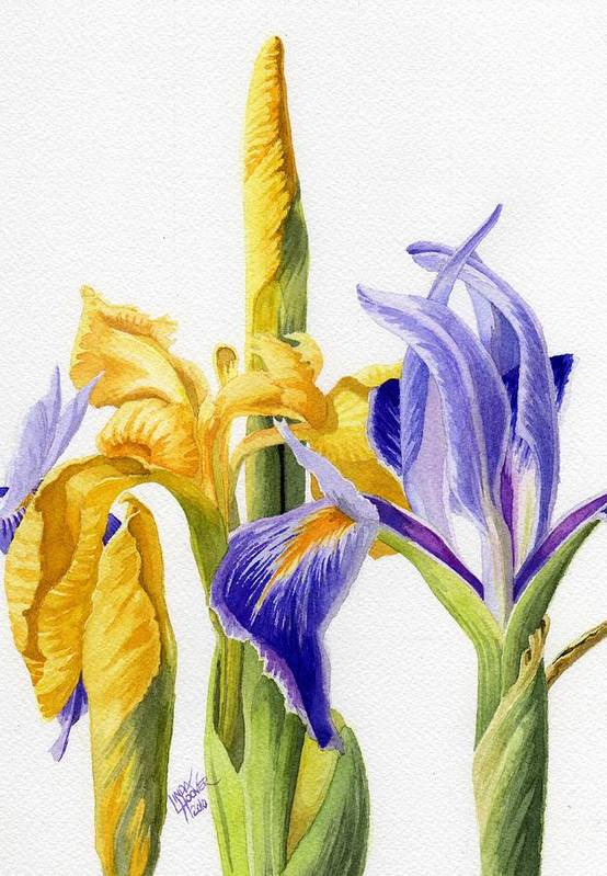 Yellow Art Print featuring the painting Iris And Flag by Linda Hoover