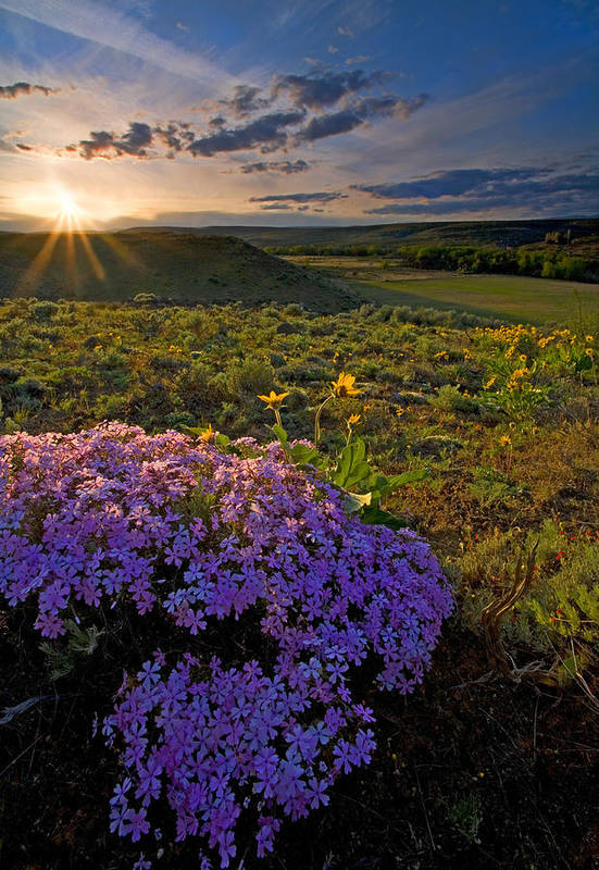 Wildflowers Art Print featuring the photograph Last Light Of Spring by Mike Dawson