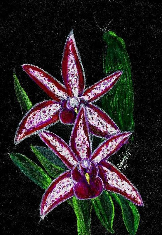 Flower Orchid Floral Reddish Purplish Art Print featuring the print Look At Me Against The Twinkling Sky by Carliss Mora