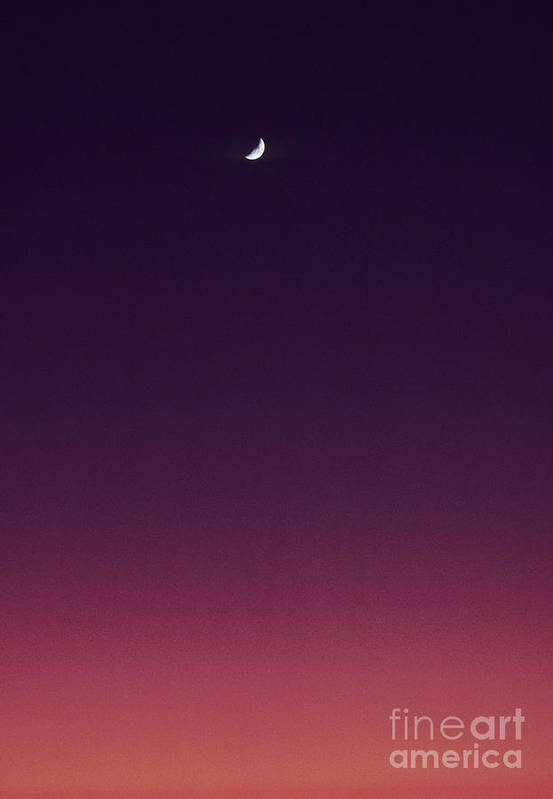 Above Art Print featuring the photograph Pink And Purple Sunset by Carl Shaneff - Printscapes