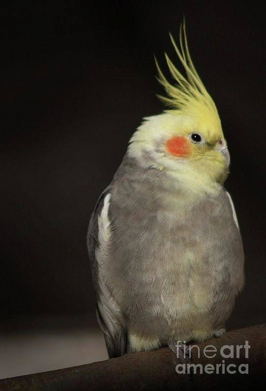 Bird Photographs Art Print featuring the photograph Sassy by Kim Henderson