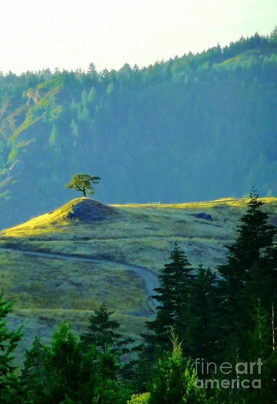 Lone Tree Art Print featuring the photograph Standing Alone by JoAnn SkyWatcher