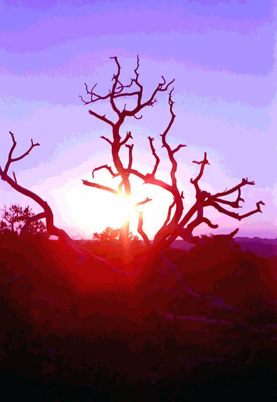 Desert Art Print featuring the photograph Sunset Through Silhouetted Tree In Desert 2 by Steve Ohlsen