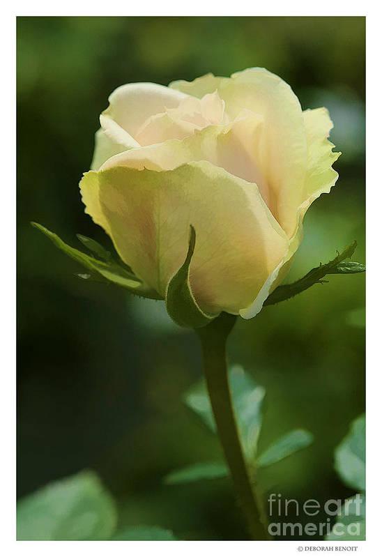Rose Art Print featuring the photograph Watercolor Rose by Deborah Benoit