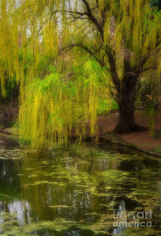 Botanica Art Print featuring the photograph Weeping Pond by Fred Lassmann