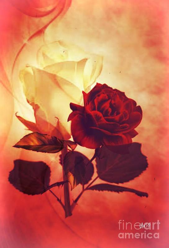 White And Red Roses Art Print featuring the digital art White And Red Roses by Maria Urso