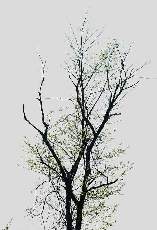 Tree Art Print featuring the photograph Tree Series Five by Hyuntae Kim