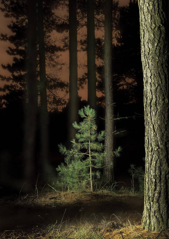 Beauty In Nature Art Print featuring the photograph Lightpainting The Pine Forest New Growth by Dirk Ercken